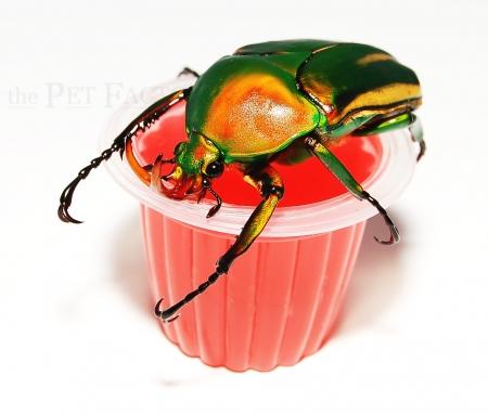 Beetle Jelly HP Erdbeer 350er Karton