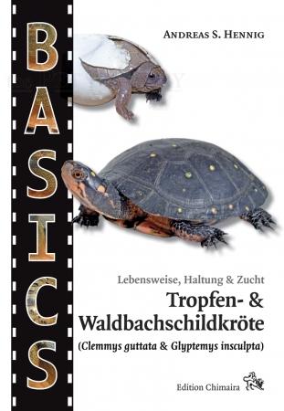 Tropfen- und Waldbachschildkröte