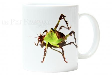 Kaffeebecher Ancylecha fenestrata
