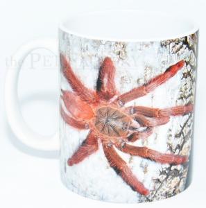 Kaffeebecher Tapinauchenius gigas