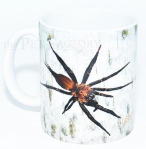Kaffeebecher Linothele megatheloides