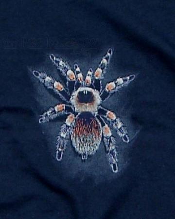 T-Shirt Brachypelma smithi