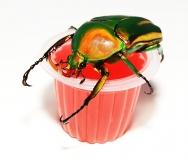 Beetle Jelly HP Erdbeer 100er Pack
