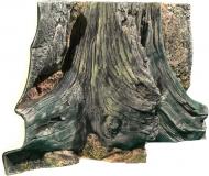 Amazonas - 80 x 40 cm