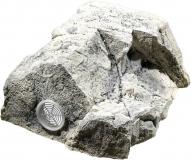 Modul T (Filtermodul) - White Limestone