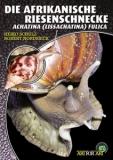 Die Afrikanische Riesenschnecke Achatina (Lissachatina) fulica