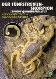 Der Fünfstreifen-Skorpion Leiurus quinquestriatus
