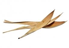 Kokosblätter klein 10-25cm 3er Pack