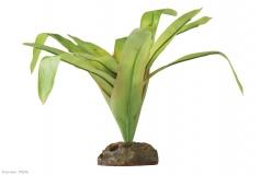 Bromelia - smart plant, medium