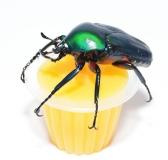 Beetle Jelly HP Mango