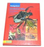 Exotische Käfer - Ratgeber