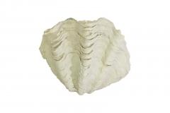 Tridacna-Muschel S