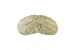 Herpolitha limax Koralle