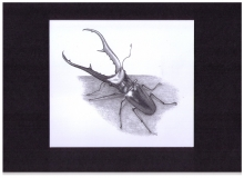 Kunstdruck Cyclommatus