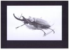 Kunstdruck Megasoma auf Hand