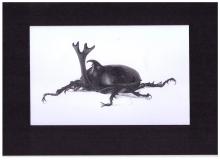 Kunstdruck Trypoxylus