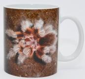 Kaffeebecher Grammostola rosea 2