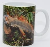 Kaffeebecher Iguana iguana