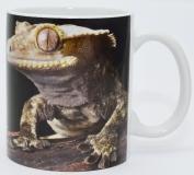 Kaffeebecher Correlophus ciliatus