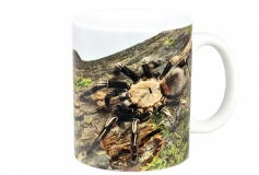 Kaffeebecher Ephebopus murinus