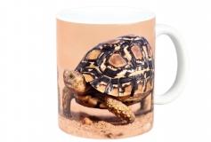 Kaffeebecher Stigmochelys pardalis