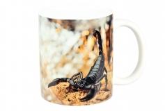 Kaffeebecher Heterometrus