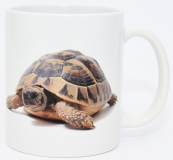 Kaffeebecher Testudo hermanni