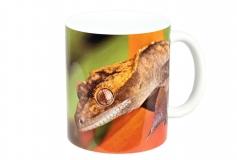 Kaffeebecher Correlophus ciliatus 2