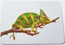 Mousepad Chamaeleo calyptratus 3
