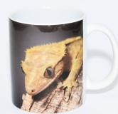 Kaffeebecher Correlophus ciliatus 3