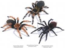 Mexikanische Vogelspinnen by Tell Hicks