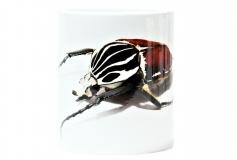 Kaffeebecher Goliathus goliatus