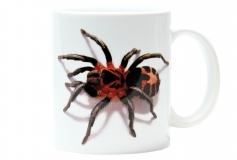 Kaffeebecher Cyriocosmus leetzi