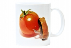 Kaffeebecher Dyscophus guineti