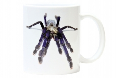 Kaffeebecher Lampropelma violaceopes