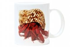 Kaffeebecher Coenobita perlatus