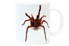 Kaffeebecher Theraphosa