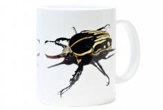 Kaffeebecher Mecynorrhina kraatzi