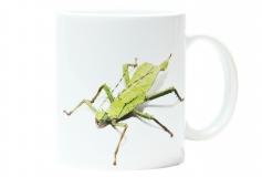 Kaffeebecher Heteropteryx dilatata