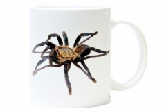Kaffeebecher Haplopelma lividum