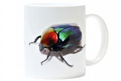 Kaffeebecher Cetonischema speciosa jousselini