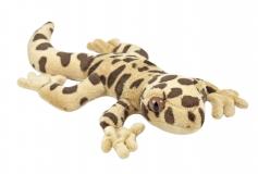 Kuschel Leopardgecko