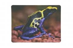 Mousepad Dendrobates tinctorius 2