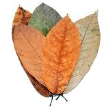 Kakao Leaves