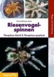 Riesenvogelspinnen Theraphosa blondi und Theraphosa apophysis