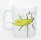 Kaffeebecher Heteropteryx dilatata 2