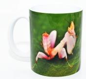 Kaffeebecher Hymenopus coronatus 2