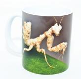 Kaffeebecher Blütenmantis