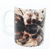 Kaffeebecher Grammostola pulchripes
