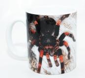 Kaffeebecher Megaphobema mesomelas